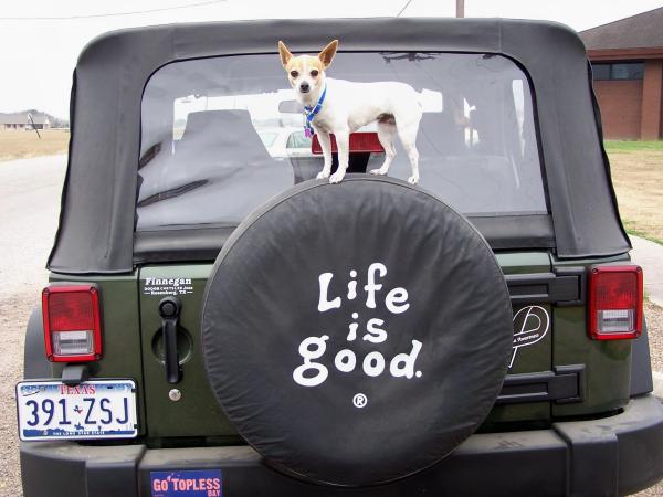 Η ζωή είναι ωραία...
