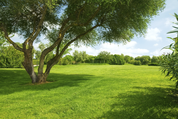 A Quick Overlook of Landscaping – Your Cheatsheet