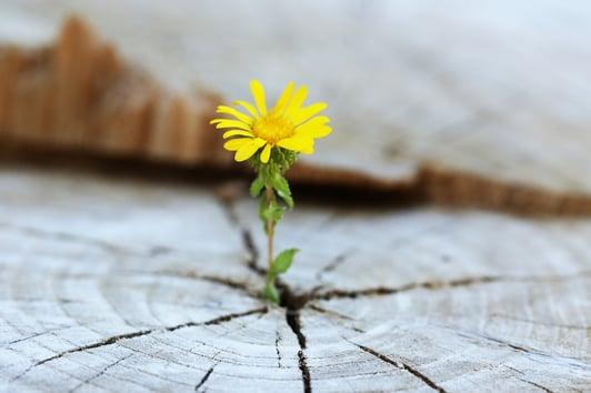 Seedling flower growing through crack