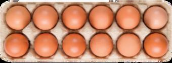 eggsxx