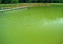 Sonic Lake And Pond Algae Control