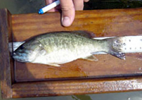 Fishery Management Best Practices