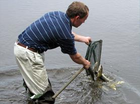 fish stocking 1