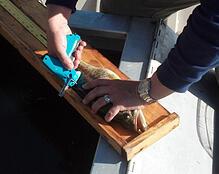 Fish Tagging during electrofishing