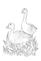 Geese Sketch by Lilyana Blackham