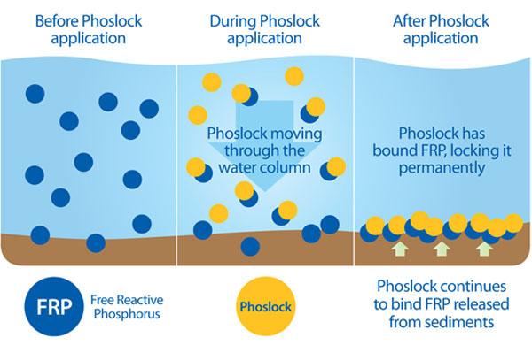 How Phoslock Binds FRP