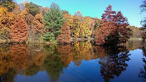 Fall pond management