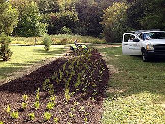 Kenilworth Park planting c