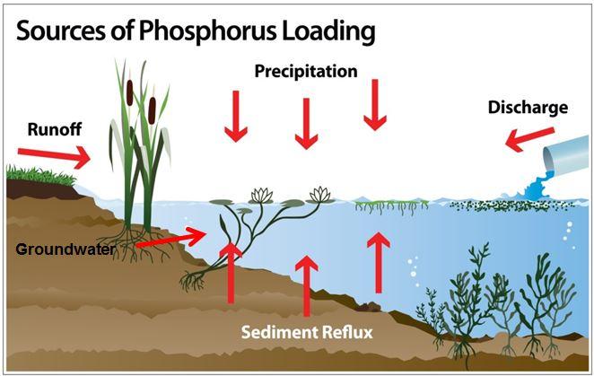 phosphorous sources