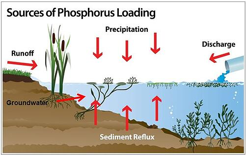 Phosphorous Sources