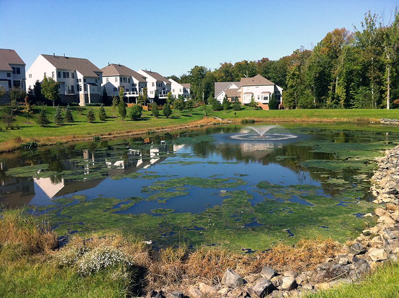 stormwater-pond-algae