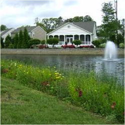 Proper Buffer Management For Your Lakes And Ponds