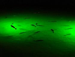 Green monster fishing