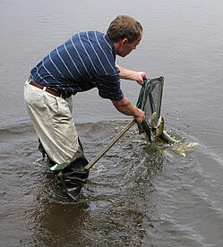 grass carp stocking for effective lake management