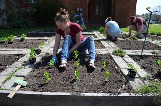 sasha owens plants community garden at five points community farm market