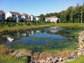 algal mat in fishing pond