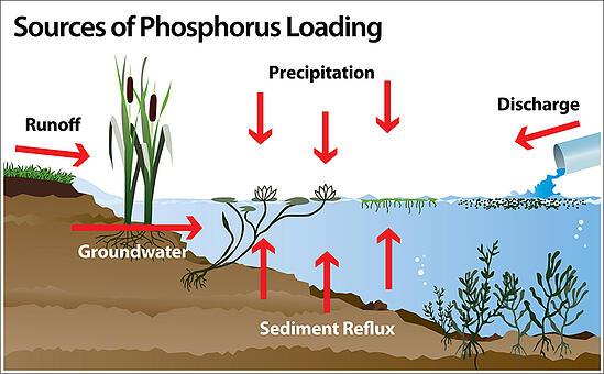 Phosphorus_shoreline_c