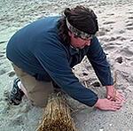 DE Park Beach Grass Planting