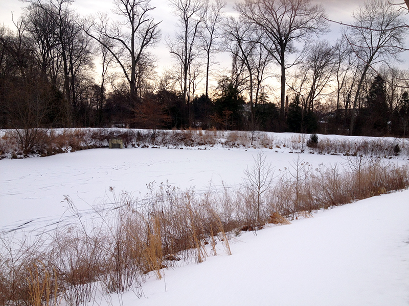 Winter pond safety from a pond management expert for Pond expert