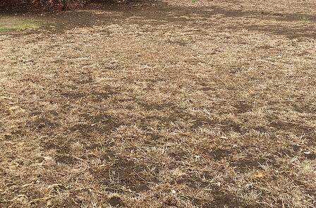Dead-Lawn-1024x675