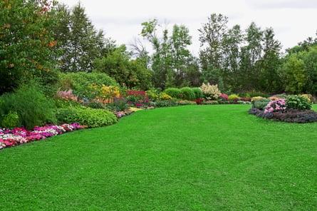 nice-lawn