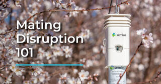 Semios pheromone dispenser in an almond orchard