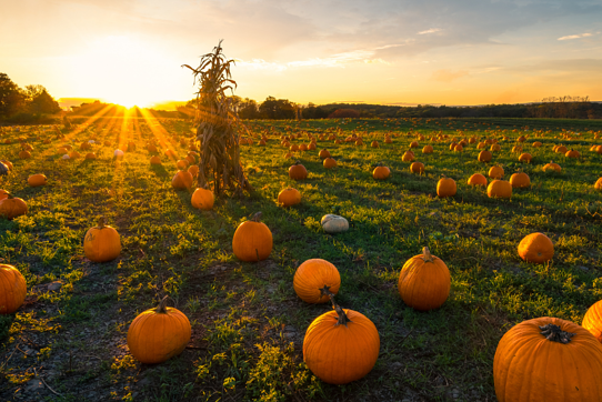 It's Pumpkin Time in Kansas City; 7 Pumpkin Patches to Visit in 2020