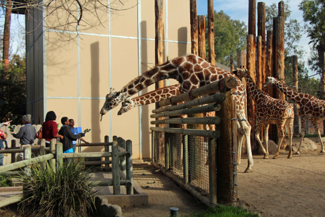 Groundbreaking Zoo-Charter Public School Puts Fresno On the Map