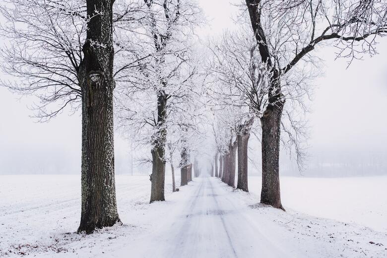 a snowy road with bare trees
