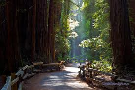 Muir Woods noise effects on wildlife