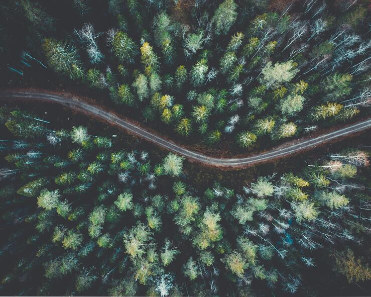 Aerial view of forest. Photo by Giovanni Bianchi, courtesy of Unsplash.