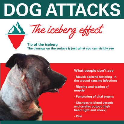 Why dog attack injuries are worse than they look