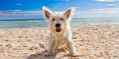 Top Beach Dangers for Dogs