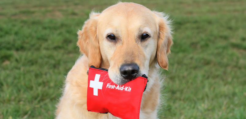 Pet First Aid Kit (a checklist of what to include)