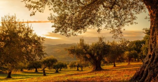 Oleoturismo paisaje olivos