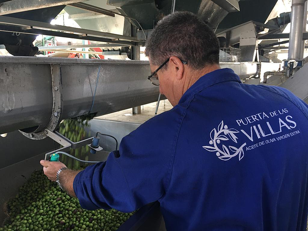 What is an Olive Oil Master Miller?