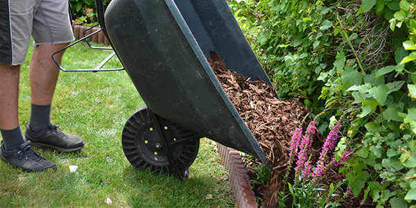 How to Use Integrated Pest Management (IPM) in Your Lawn
