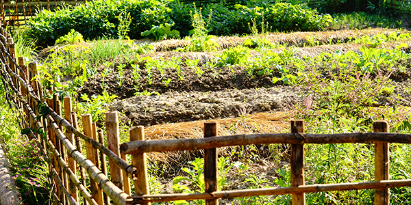 5 Simple Steps to Start a Permaculture Garden