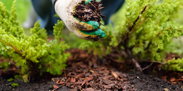 Common Gardening Mistakes and Solutions