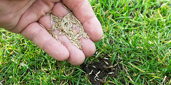 How and When to Seed a Lawn