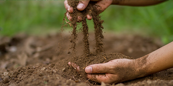 Ways to Increase Beneficial Bacteria in Your Soil