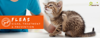 Central Pet Flea treatment, symptoms, and prevention