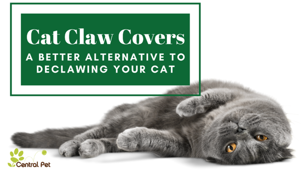 Cat Claw Covers - A better alternative to declawing your cat