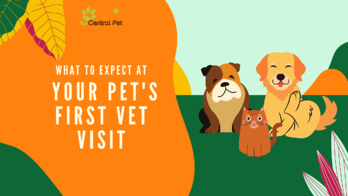 What to expect at your dog's first vet visit