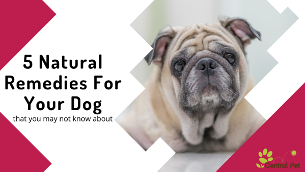 5 natural remedies for your dog's aliments