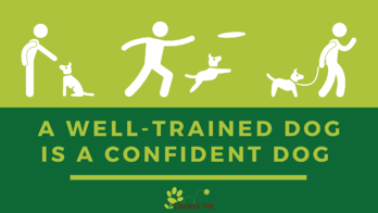 A well trained dog is a confident dog