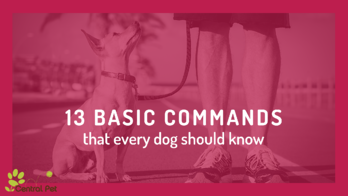 basic commands that every dog needs to know