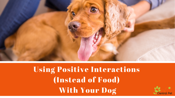 Using positive interaction instead of food to train your dog