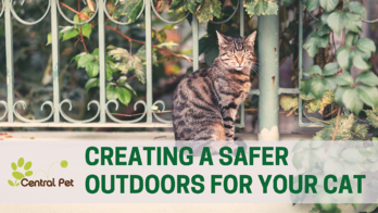 How to create a safe outdoor space for your cat