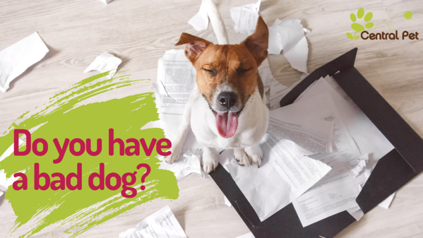 Do you have a bad or restless dog?